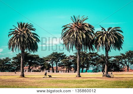 Palm Trees In San Francisco