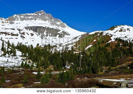 Snowy Mountain Towering Over the Forest.  Yankee Boy Basin, Rocky Mountains, Colorado, USA.
