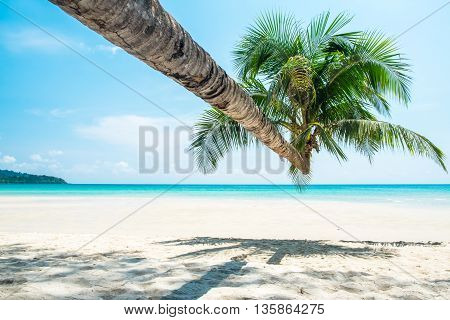 Coconut palm tree at the white sand beach and aqua sea water and blue sky on a sunny day
