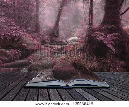 Unusual Surreal Alternate Color Forest Landscape Image