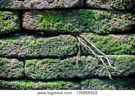 close upstone brick with moss texture background.