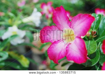 Colorful blooming flowers in a botanic garden.