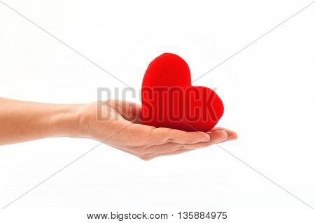 The doctor holding heart in hand, medical concept
