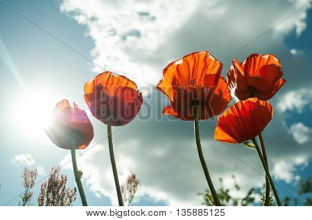 Flower flower bloom Time of happiness Gladden beautiful sky people rest day love  locus Many flowers plant art