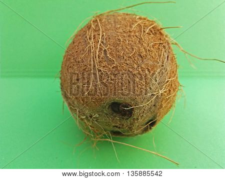 Coconut (cocos nucifera) nut over light green background
