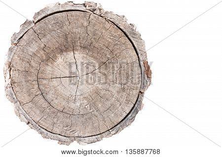Closeup wood texture of cut tree trunk
