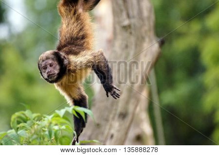 a monkey that falls from the tree in speed. you can see the unique images