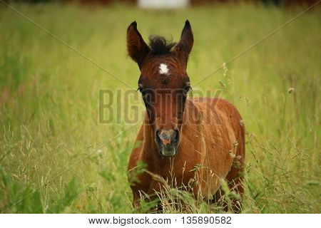 horse an exceptional animal. perhaps the most beautiful animal on earth in fascinating picture little
