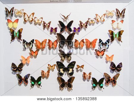 Pyatigorsk, Russia - 3 March, Collection of butterflies of Indonesia and Oceania, 3 March, 2016. Resort zone Mineral Waters, Krasnodar region. Insect Museum.