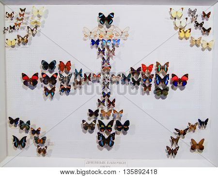 Pyatigorsk, Russia - 3 March, Collection of colored butterflies, 3 March, 2016. Resort zone Mineral Waters, Krasnodar region. Insect Museum.