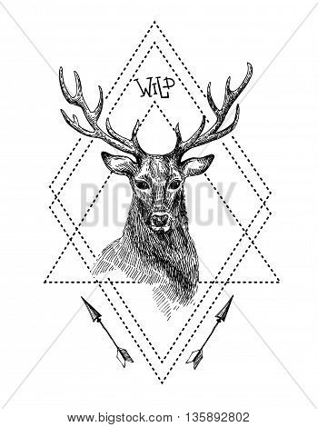 Hand drawn illustration deer. Sketch of deer. Black and white isolated deer.