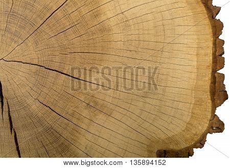 Large picture of a tree trunk cross section