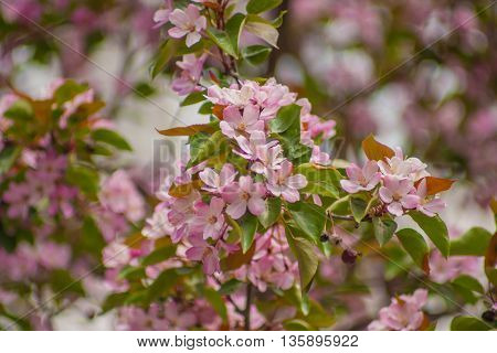 Background image of spring. Suitable for postcards and textiles paper and holidays.