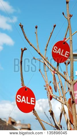 Round red sale signs hanging on tree branches on blue sky background