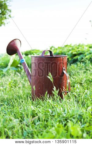 Old metal watering can garden on the bright green grass. Summer sunny day.