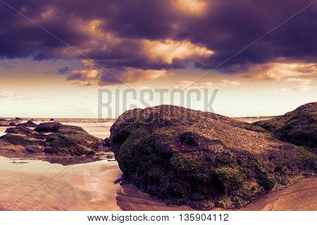 Rocks with algae on the beach.  Toned image