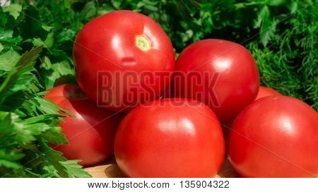 fennel, parsley and red tomatoes lie on a tray with brown light paper, bright, a sunny day,
