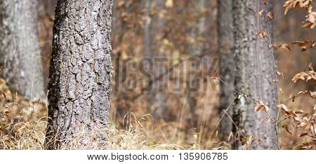 Nature banner of a tree trunk in the autumn forest