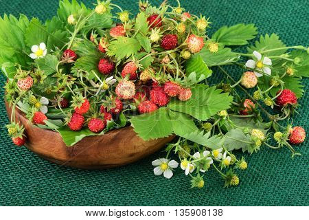 Wild strawberry or woodland strawberry on green jute fabric.