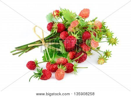 Wild strawberries. Woodland strawberries on white background.