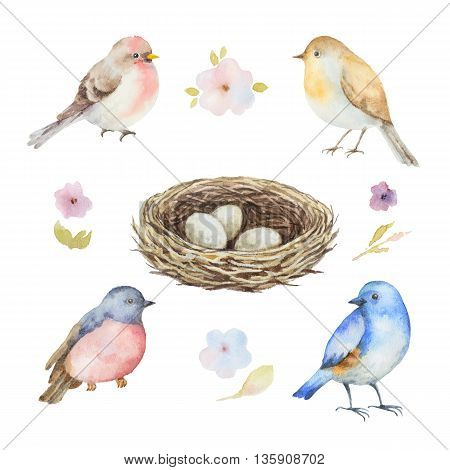 Watercolor set of birds, flowers and socket with eggs. Hand painted illustration on white background. Elements for design of congratulatory cards, invitations, business cards and more.