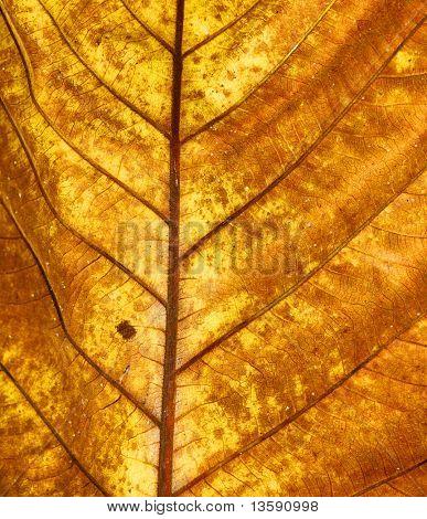 Fall Leaf Texture