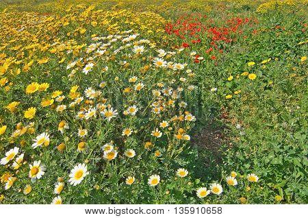 Mallorca Blossoming Spring Landscape
