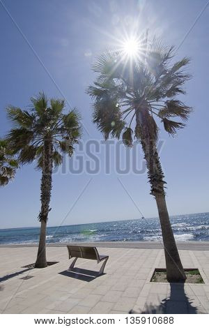 Radiant sunshine palms and seaside bench in Palma de Mallorca Spain in April.