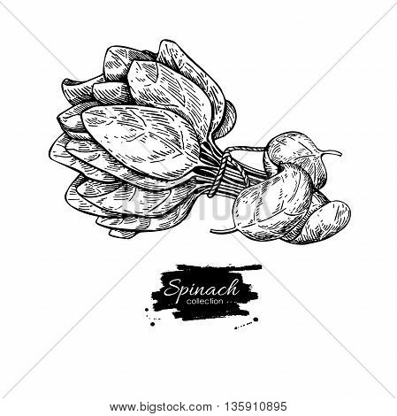 Spinach leaves bunch hand drawn vector. Isolated Spinach leaves drawing on white background. Vegetable engraved style illustration. Detailed botanical drawing. Farm market product