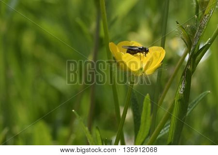 Yellow flower with an insect on it