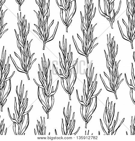 Rosemary vector drawing seamless pattern. Isolated Rosemary plant with leaves. Herbal engraved style illustration. Detailed organic product sketch. Cooking spicy ingredient