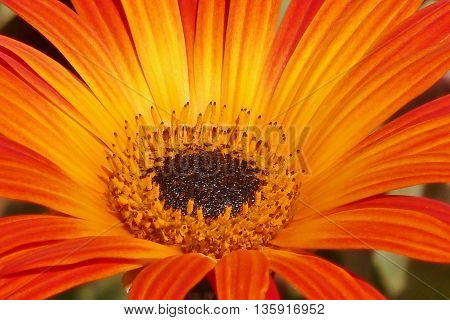 a beautiful flower with petals texture Detailed