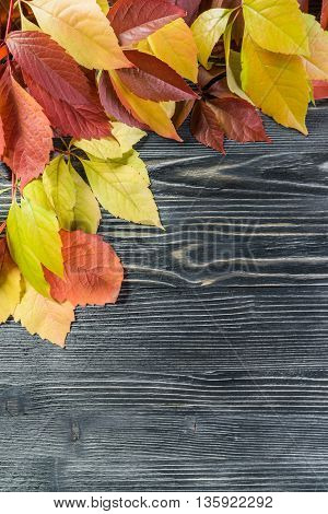 Yellow And Orange Leaves On Wooden Boards