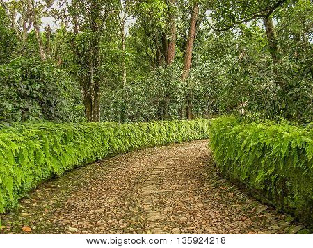 Cobblestone lane lined with green fern hedge curving towards trees.
