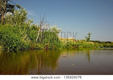 Overgrown with dense green bushes and grasses river bank Liwiec in Poland. Beautiful sunny summer day with blue cloudless sky. Horizontal view.