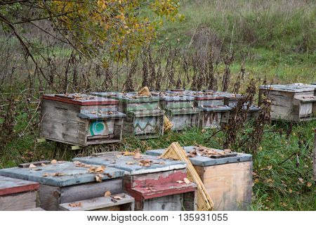 Beehives for honey production, cattery for home use