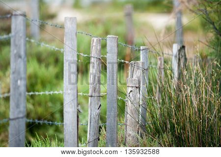 barbed fence close up in the summer