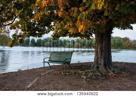 Bench under the tree in autumn weather