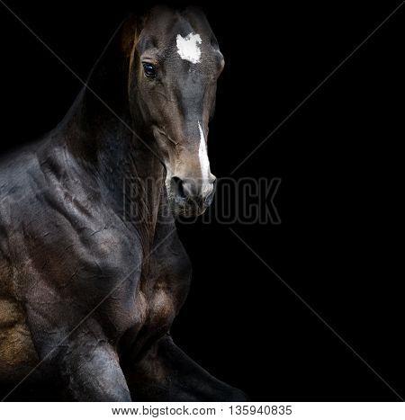 akhal-teke horse portrait closeup in low key on black background