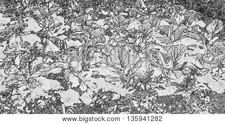 Black and white illustration with a variety of leaves