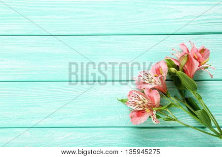 Beautiful Alstroemeria Flowers On A Mint Wooden Table