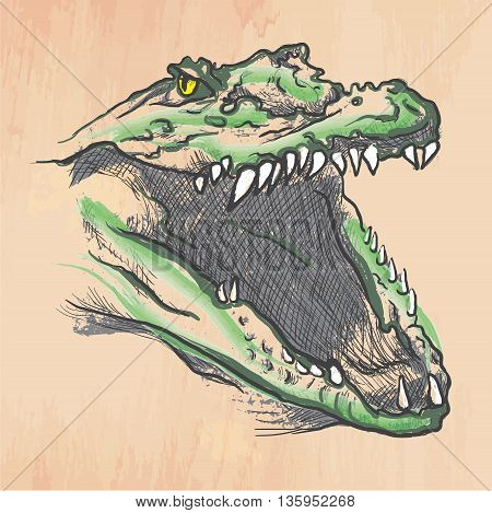 An hand drawn retro vector illustration colored line art. Freehand sketch of CROCODILE head. Hand drawing is editable in layers and groups. Background is isolated. Vintage processing.