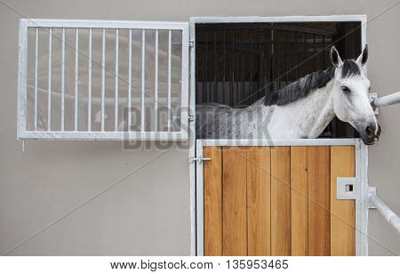 Horse looking over the stable doors