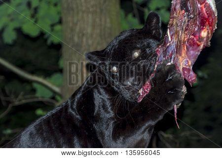 Black Jaguar Lunch