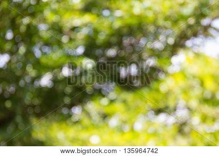 Natural Bokeh Tree Bush And Sunlight In Romantic Mood