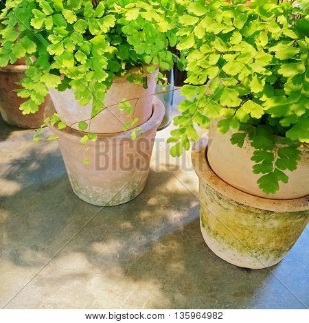 Green plants in clay pots under sunlight. Garden decor.