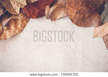 Autumn leaves copy space toning border background