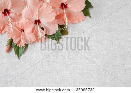 Pink Hibiscus Flowers On Linen, Copy Space Background, Selective Focus, Toning