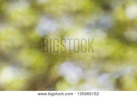 Dreamy Green Bokeh Background
