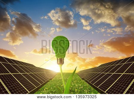 Solar panels with lightbulb on plant against sunset sky.Clean energy.